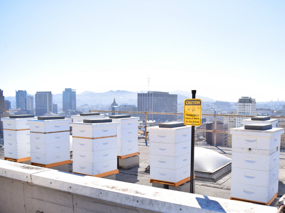 CLIFT_SF_Rooftop_Bee_Sanctuary__2